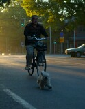 Walking the dog by bicycle at sunrise, Beijing